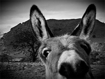 aesops_donkey